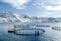 saumon-remede-crise-alimentaire